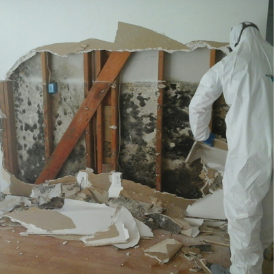 Mold Removal Boynton Beach