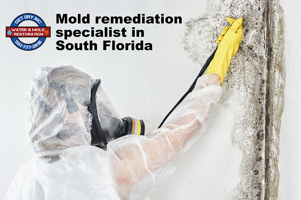 South Florida Mold Specialist
