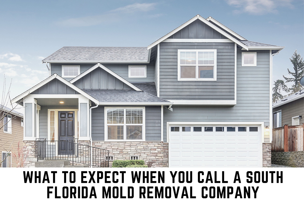 South Florida Mold Removal by Get Dry Inc
