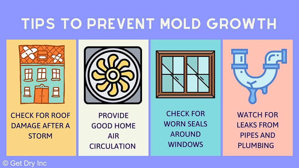 Infographic on tips for preventing mold.