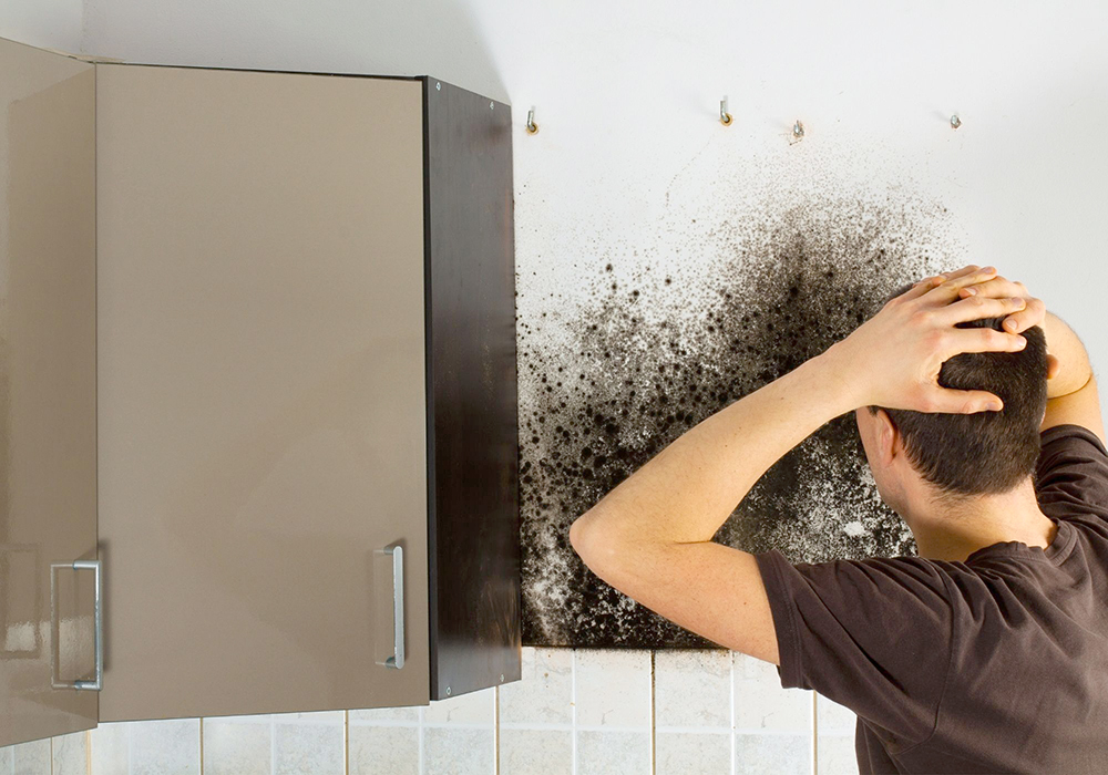 Mold removal in Martin County