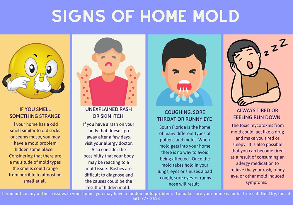 Infographic showing signs you may have a mold problem.